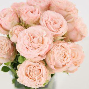 rosa madame