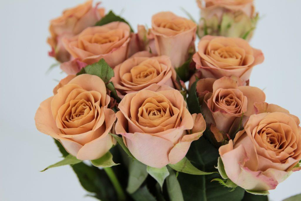 rosa capuccino