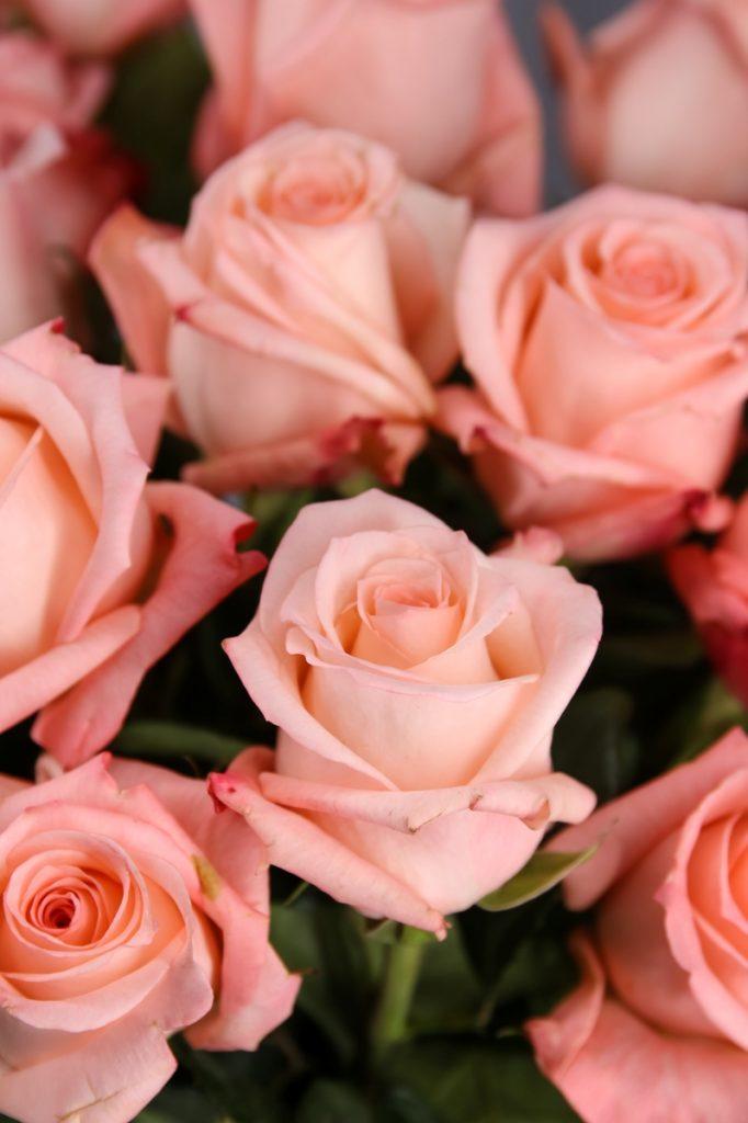 rosa engagement