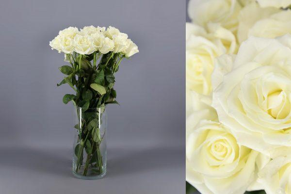 rosa blanca pequeña