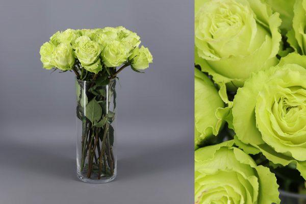rosas verdes