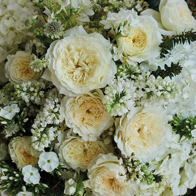 rosa blanca de jardín