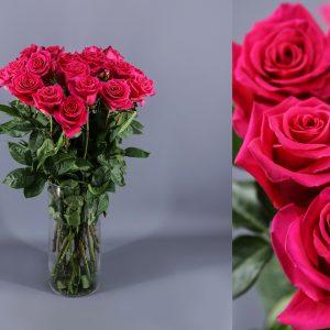 rosas hot pink