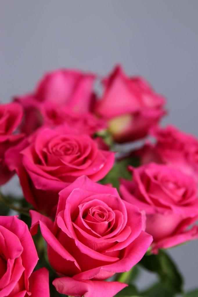 rosa pink floyd