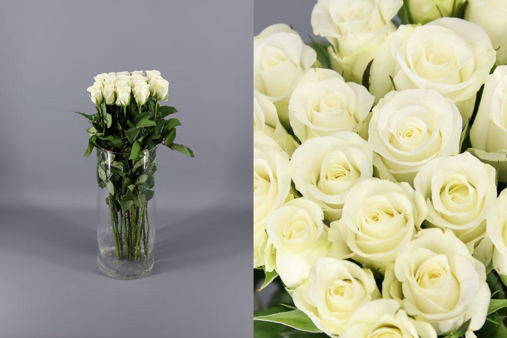 rosas blancas akito
