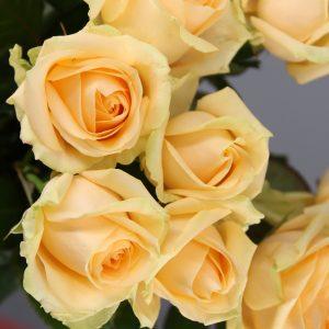 rosas peach