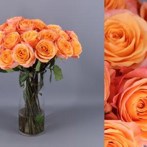 rosa coral naranja