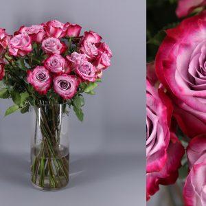 rosas lila