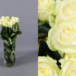 rosas blancas dolomiti