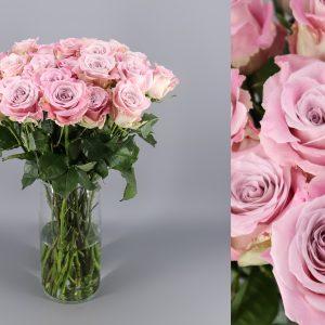 rosa envejecida lavanda