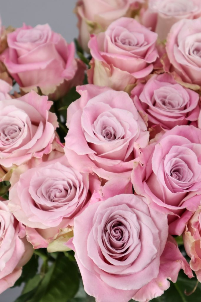 rosa faith