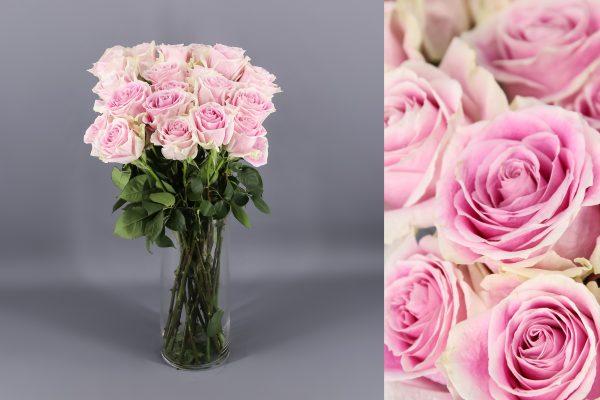 rosa color rosa claro