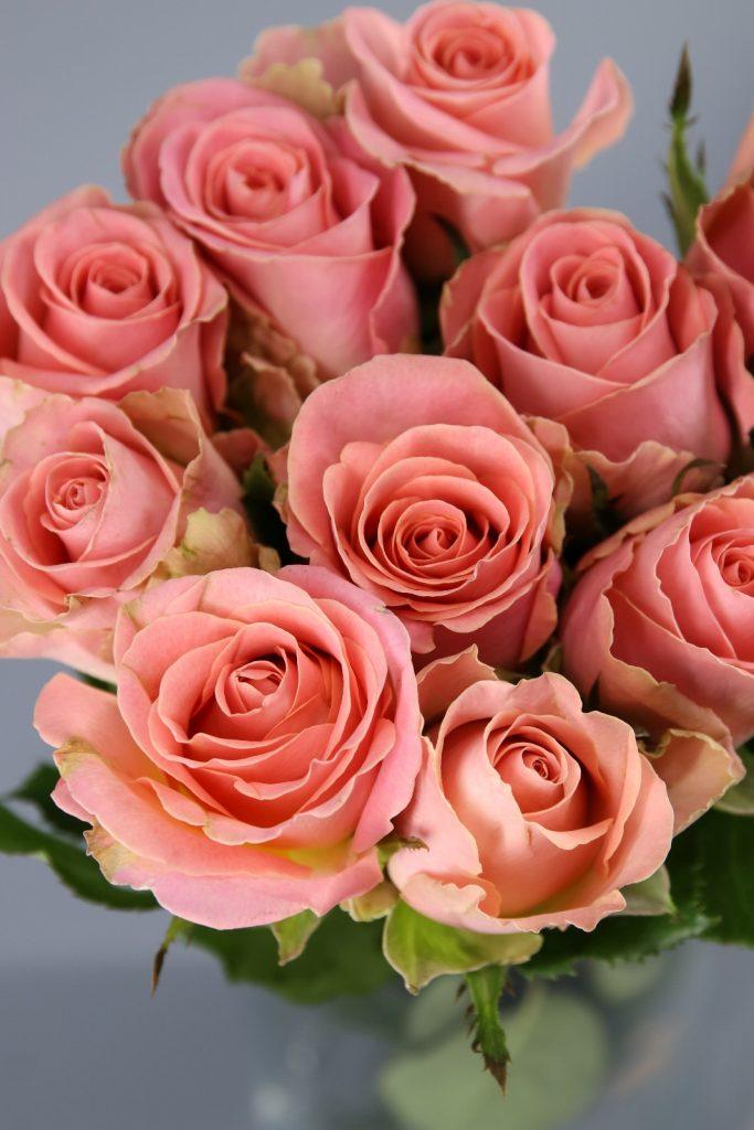 HERMOSA rosa color rosa