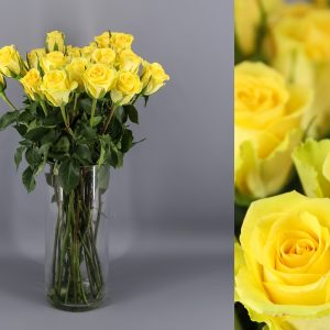 rosas color amarillo