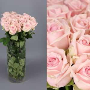 rosas color rosado