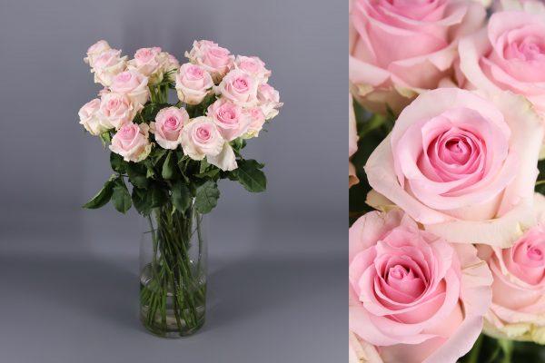 rosas color rosa bebe