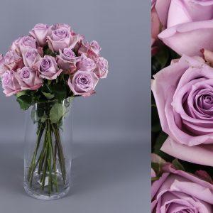 rosas lavanda