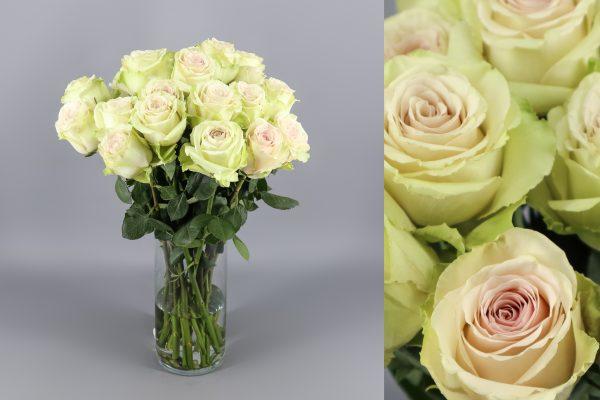 rosas crema