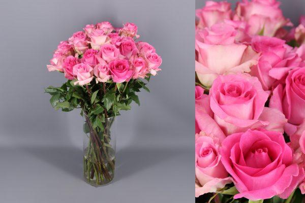 rosas pink