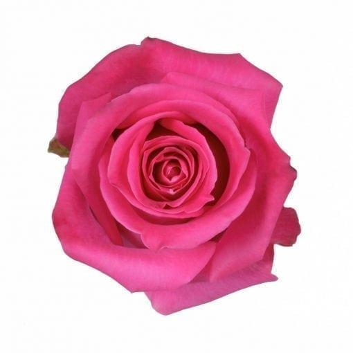 rosa topaz