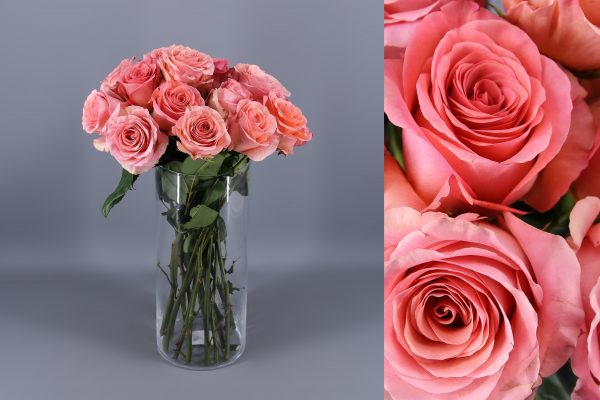 rosas saga