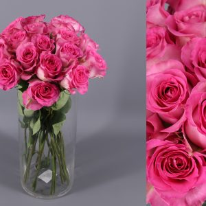 rosas fucsia
