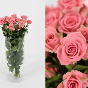 rosas ramificadas