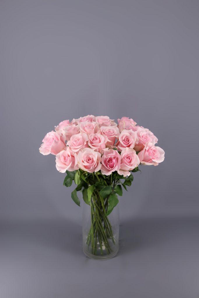 rosa titanic