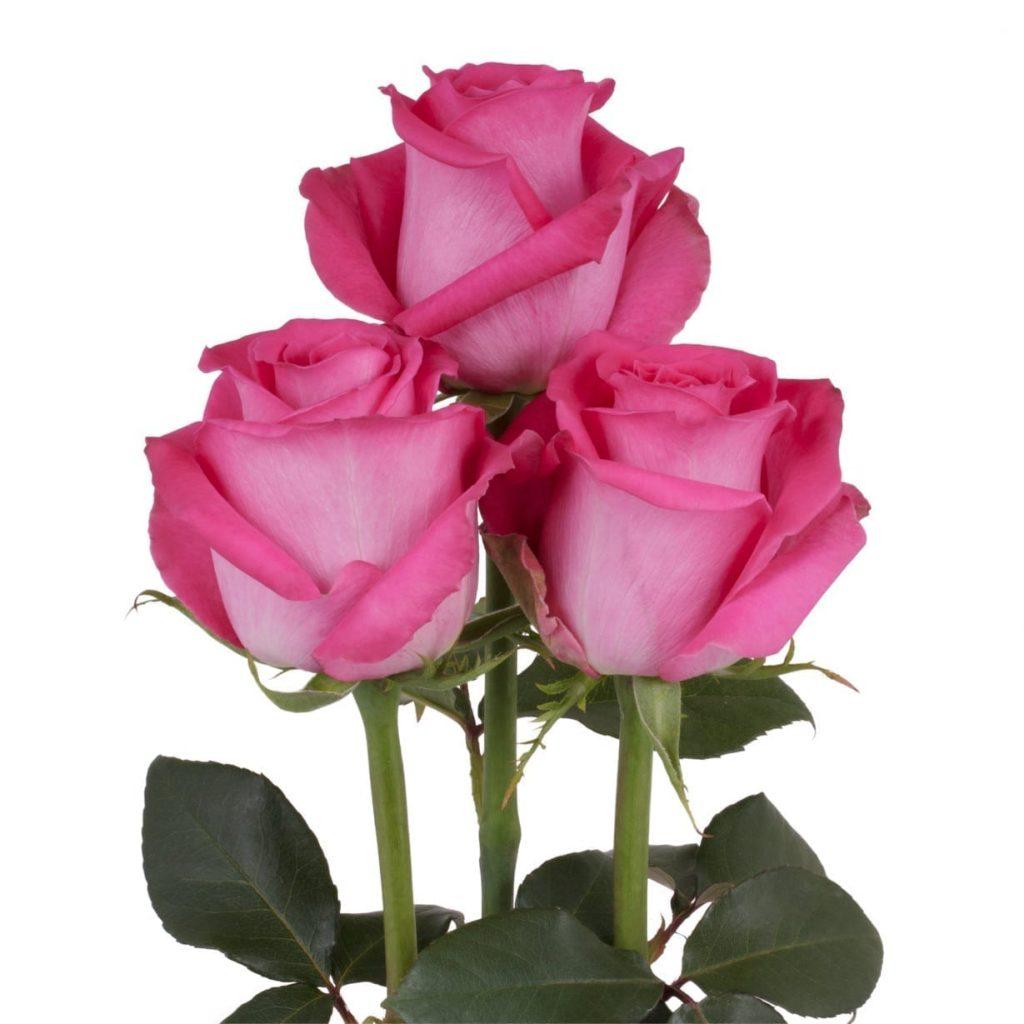 topaz rose