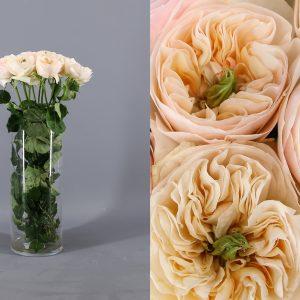rosa de jardin crema