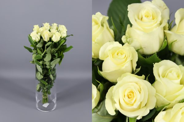 rosa blanca aspen