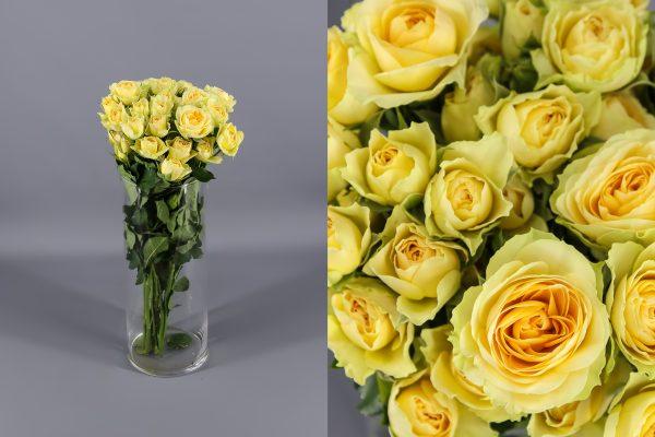 rosas amarilals