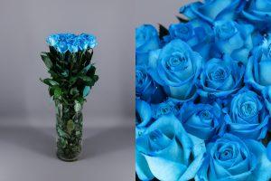 rosa celeste o light blue