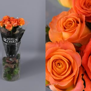 rosas naranjas holandesas