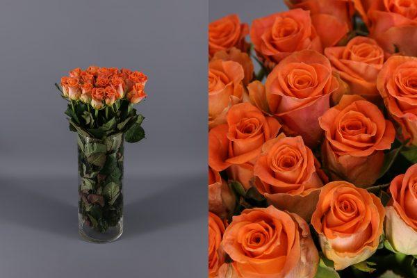 rosas naranjas colandro holandesas