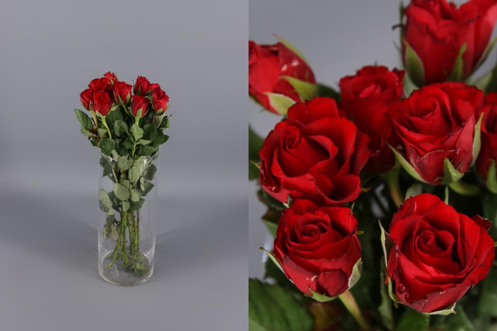rosa red calypso