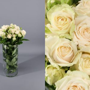 rosas crema r