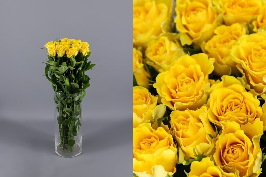 rosas spray yellow