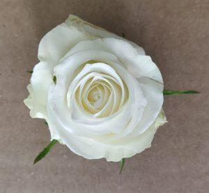 rosa blanca alpe d'huez