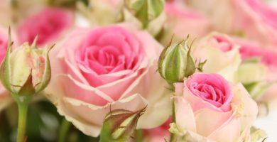 rosa ramificada mimi eden