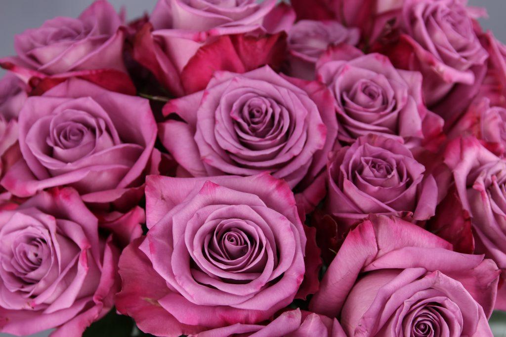 rosaas lila