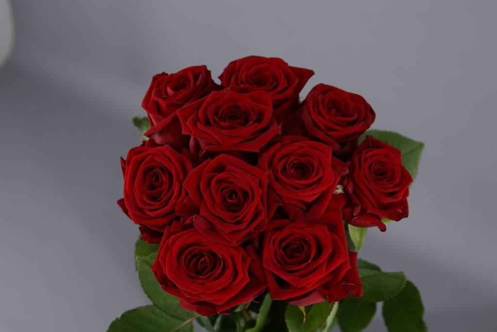 rosas red naomi