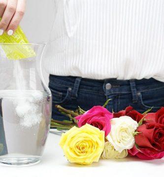 como cuidar tus rosas