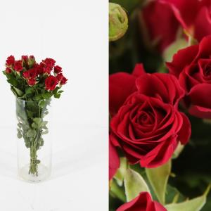 rosas rojas pequeñas