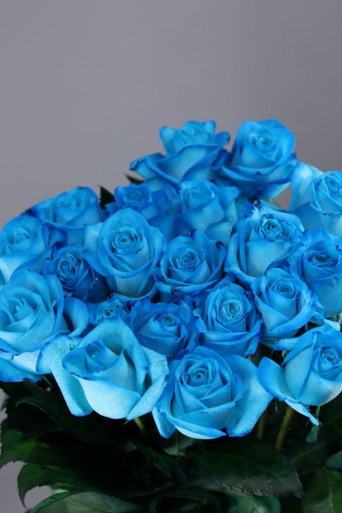 rosas celeste