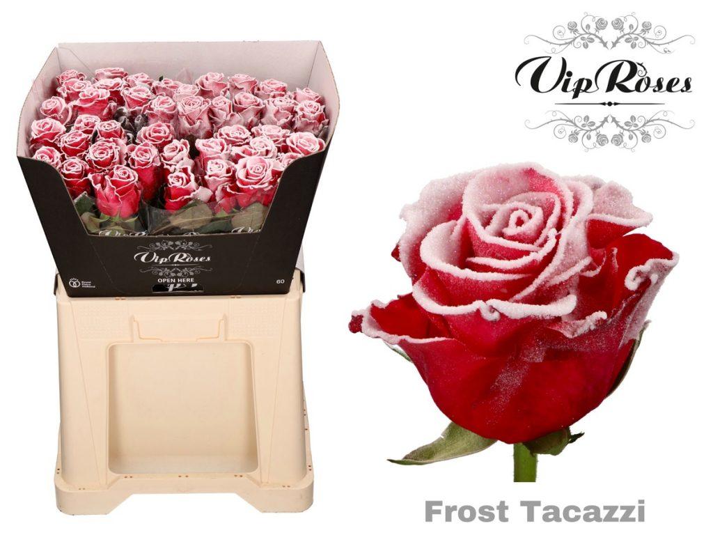 xmas roses