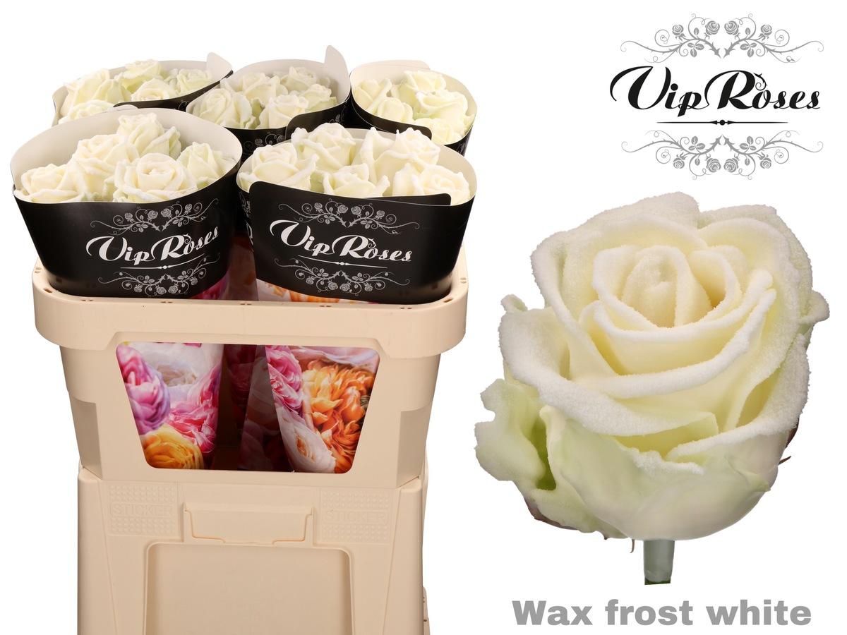 rosas blancas viproses