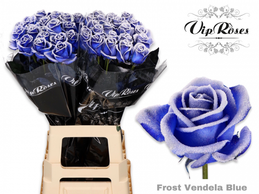 rosas azules frost