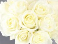 signifiacado de las rosas blancas