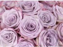significado de las rosas lavanda